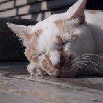 home_animals_photo11