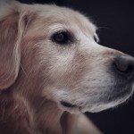 home_animals_photo2
