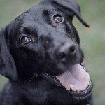 home_animals_photo5