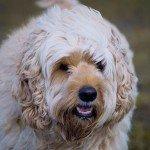 home_animals_photo7