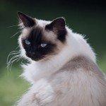 home_animals_photo9