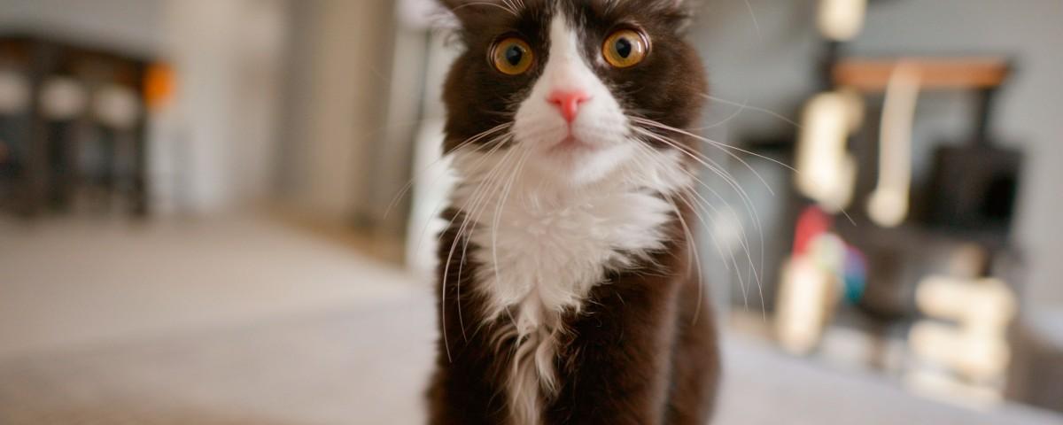 catnip-gatos-petyzoo