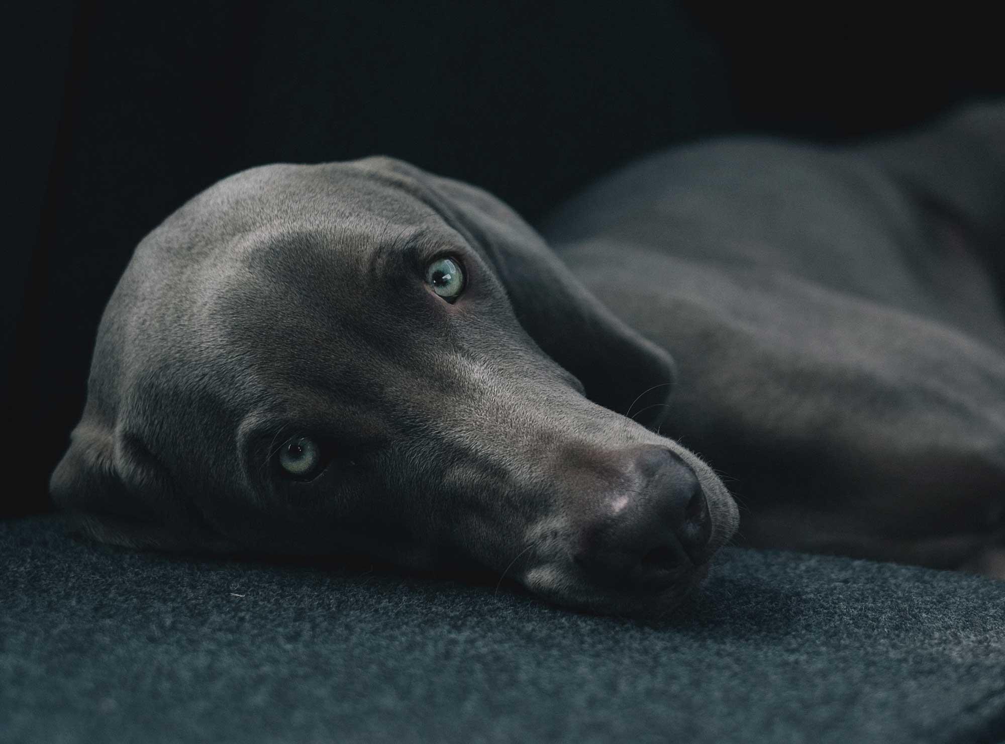 perros-y-mascotas-petyzoo