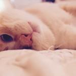 Cómo saber si tu gato te quiere: 10 extrañas formas de demostrarlo.