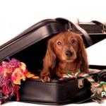 Consejos para convertir a tu perro en un viajero