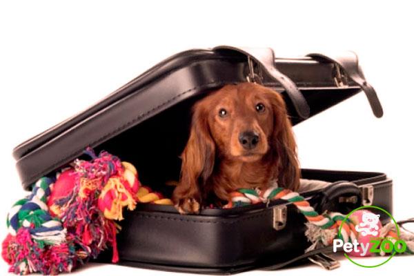 consejos-viajar-con-perro-petyzoo