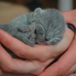 Cómo cuidar gatitos recién nacidos