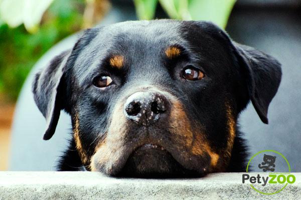qué perros necesitan licencia ppp