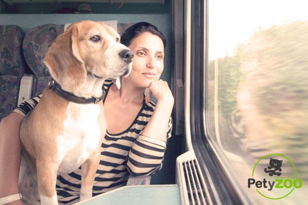 viajar-en-tren-perro-espana-petyzoo.com