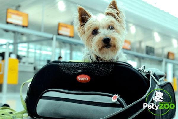 viaje-avion-con-perro-consejos-en-pety-zoo