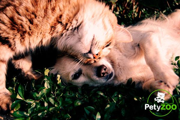 alergia-gatos-perros-petyzoo