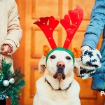¿Qué le regalo a mi perro por Navidad?