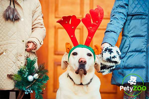 petyzoo-perros-navidad