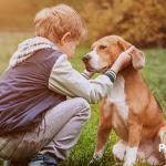Cómo crear un vínculo entre tu mascota y tu hijo