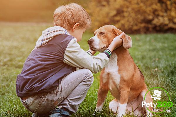 petyzoo-blog-mascotas-perros-ninos