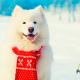 petyzoo-blog-perros-frio-invierno-navidad