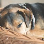 ¿Qué pasa con tu perro cuando no estás en casa?