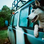 Breve: Viajar por el mundo con tu perro
