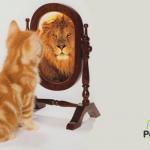 Breve: ¿Cómo convertir a tu gato en un verdadero león?