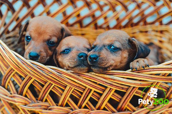 foto-blog-petyzoo-nombres-cachorros