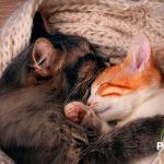 Cómo presentar un nuevo compañero a tu gato