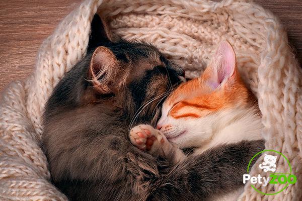 foto-gatos-conocerse-presentar-petyzoo