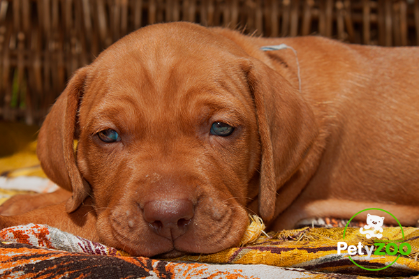mascotas-perros-adios-petyzoo