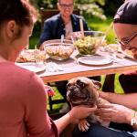 Tu perro valora más tu compañía que la comida