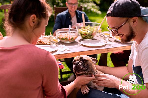 mascotas-petyzoo-perros-caricias-comida