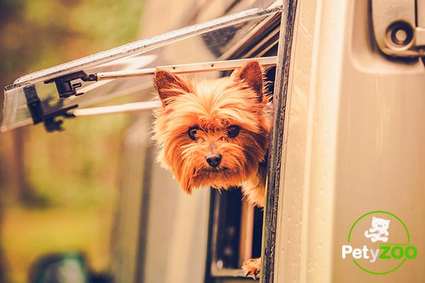 Blog-petyzoo-camping-perro