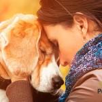 Cómo comunicarte con tu mascota