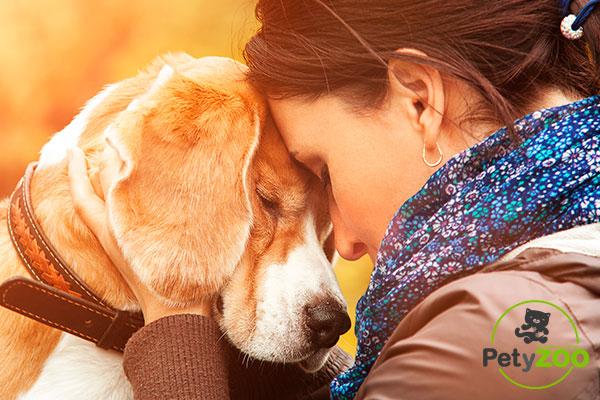 comunicacion-perro-Fotos-Petyzoo