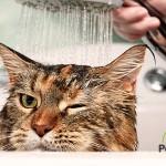 ¿Tú también tienes problemas para bañar a tu gato?