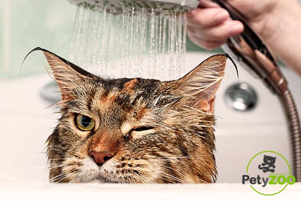 gatos-bañera-Fotos-Petyzoo