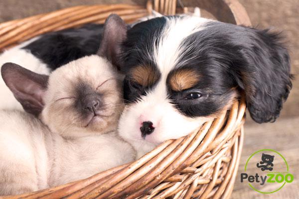 perro-gato-Fotos-Petyzoo