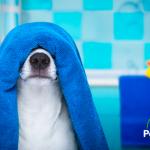 Cómo preparar un baño perfecto para mi perro