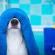 blog-petyzoo-bañar-perro-consejos