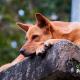 blog-petyzoo-dormir-descanso-perro-mascota