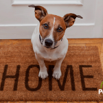 Los perros a los que no les gustaban las visitas…