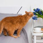 Razones por las que tu gato no puede evitar tirarlo todo al suelo