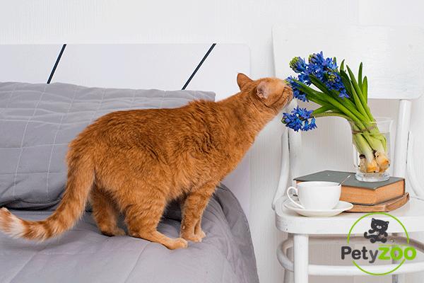 petyzoo-gato-tirar-suelo-cosas