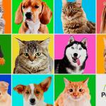 ¿Quién es más inteligente? ¿Perro o gato? – Descubre qué animal gana