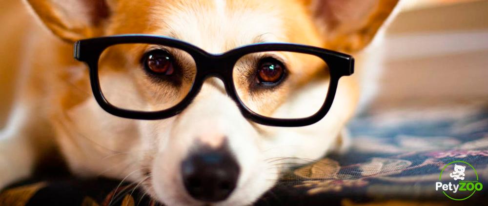 perros-mas-inteligentes-mascotas-animales