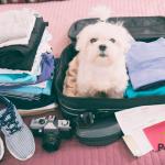 Decálogo para viajar con mascotas