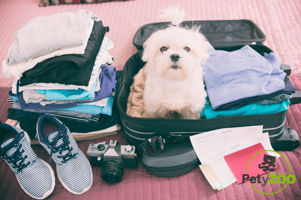 petyzoo-consejos-viajes-maleta