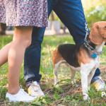 Todo este tiempo no sabías pasear a tu perro…