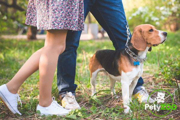 petyzoo-paseos-mascotas