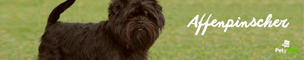AFFENPINSCHER-raza-perro-todo-tipo