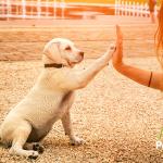 Quizás tu perro es de la raza más inteligente y no lo sabías
