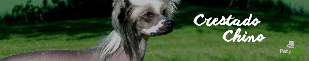 raza-perro-crestado